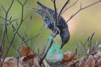 Vetbollen en Pindasnoeren maken