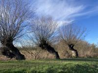 Winterexcursie
