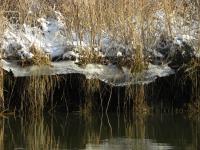 Winters Rondje Hollandse Biesbosch